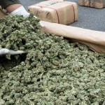 Legalizzare la marijuana perché non fa male