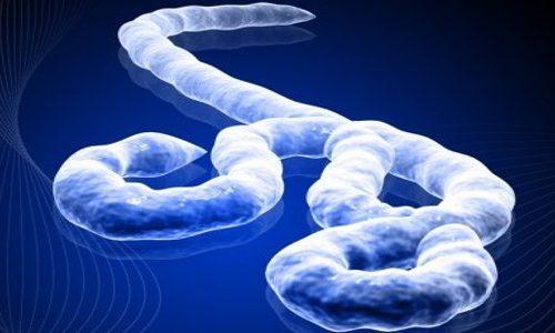 Nuovo caso sospetto di virus Ebola in Canada
