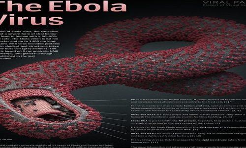 Virus Ebola, situazione 2014 e cura