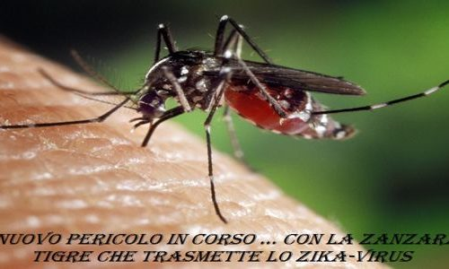 Zika, il nuovo virus trasmesso dalle zanzare tigre.